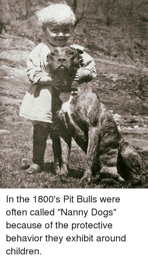 Memes 🤖 and Pit Bull In the 1800 s Pit Bulls were often called