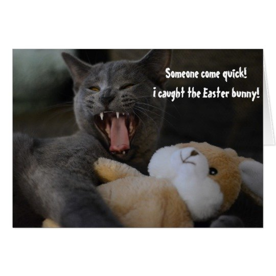 Cat Caught the Easter Bunny Funny Humour Greeting