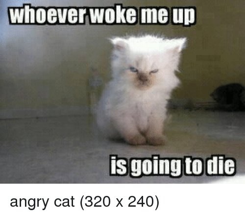 Funny Angry and Angry Cat whoever woke me up is going to