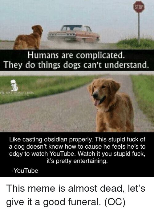 Dogs Meme and youtube STOP Humans are plicated They do