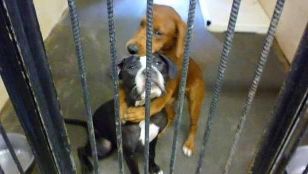 24 Horas on Shelter DogsAnimal ShelterSheltersAwesome DogsFunny