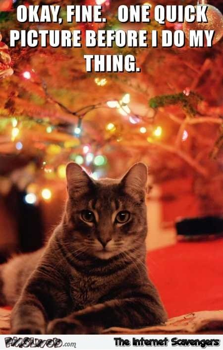 e quick picture before I knock the Christmas tree down funny cat meme