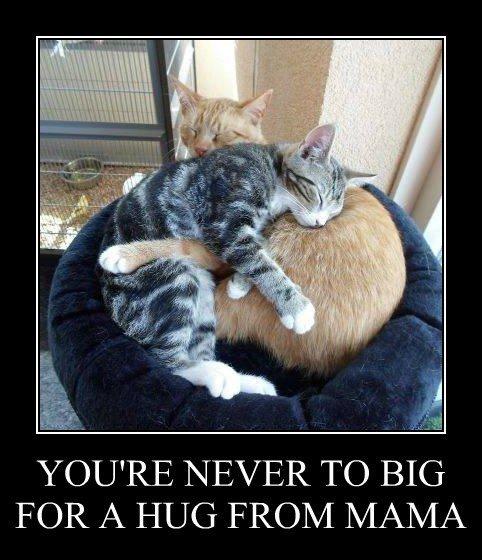 Cats cute forting hug kitten mama