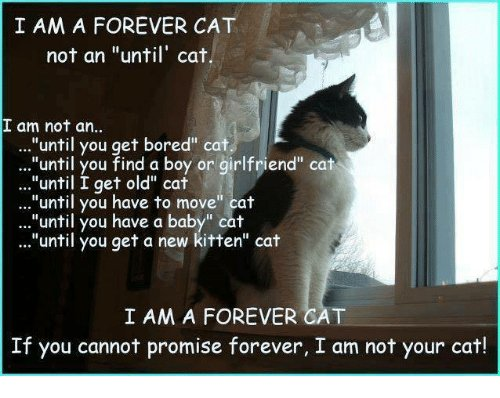 """Bored Memes and Forever I AM A FOREVER CAT not an """"until"""