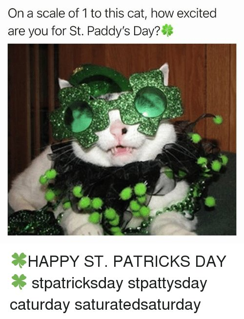 Caturday Funny and St Patrick s Day a scale of 1 to this