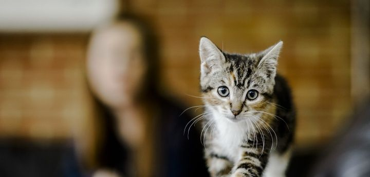 Looking for the perfect name for your cat or kitten We have put to her a top 10 list of the most popular cat names To create the list we have looked the