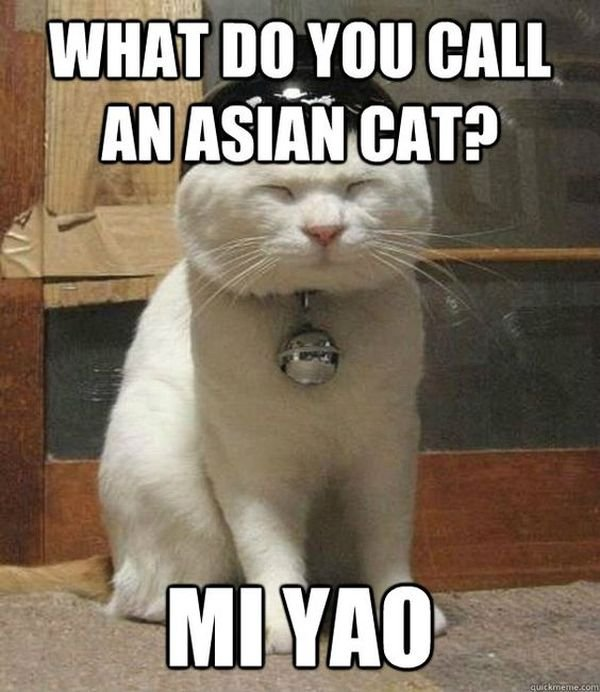 Funny Asian Cat