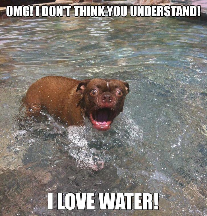 Funny Animal Humor Funny Pets