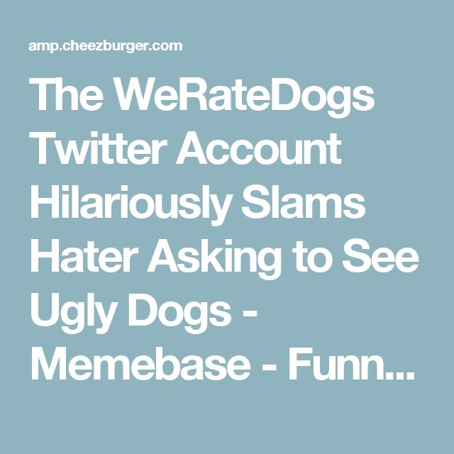 The WeRateDogs Twitter Account Hilariously Slams Hater Asking to See Ugly Dogs Memebase Funny