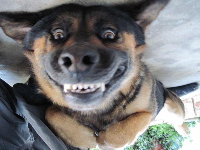 happy dog cracked me up