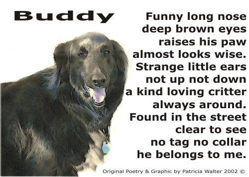 Gather the New Pictures Of Funny Dog Poems
