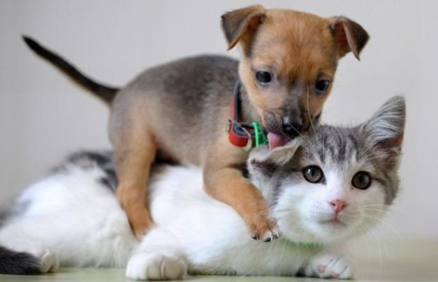 Funny Cat & Dog Friendship