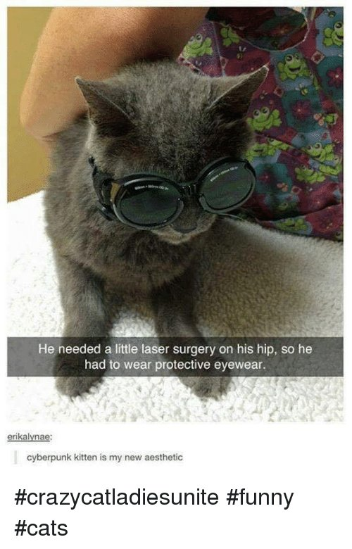 Memes Aesthetic and Kittens He needed a little laser surgery on his hip crazycatla sunite funny cats