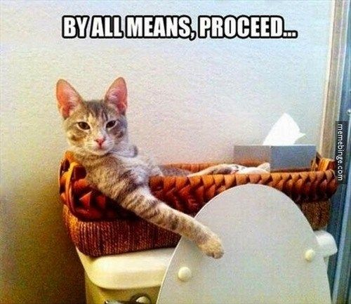 Gather the Prodigious Funny Cat Pictures Meme Funny Funny Stop Funny Funny