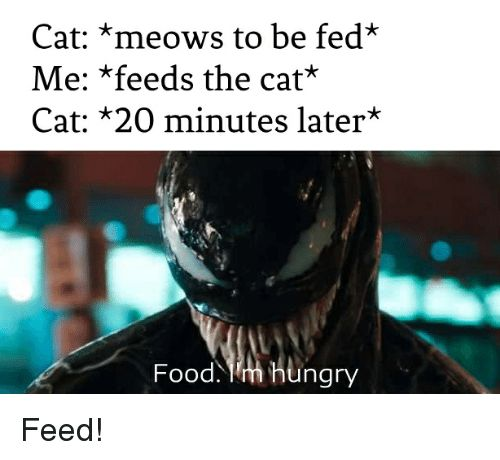 Food Funny and Hungry Cat meows to be fed Me
