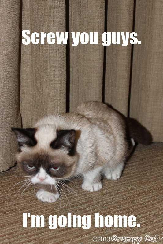 Hilarious Cat Meme Fresh Catsmemes Funny Animal Cat Memes Cats Funnycatsjust