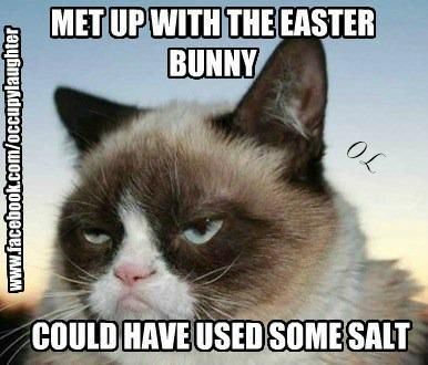 Gather the Shocking Funny Cat Easter Memes