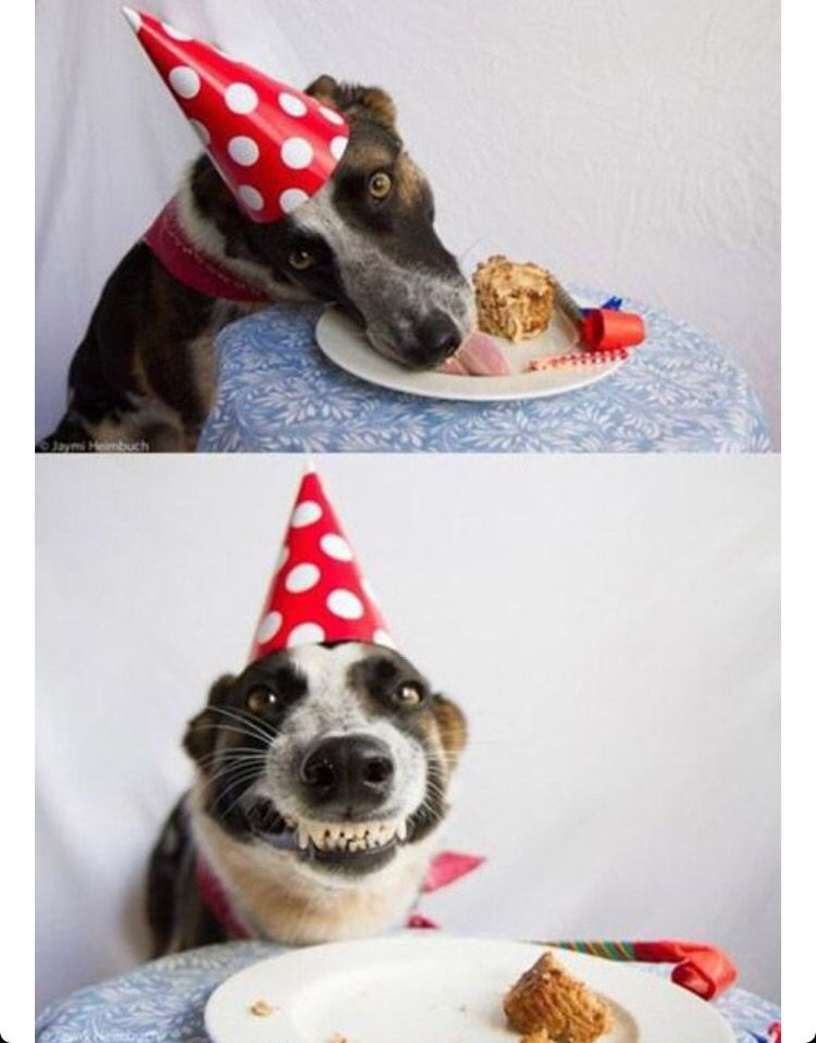 Dog s Birthday Party The best funny pictures
