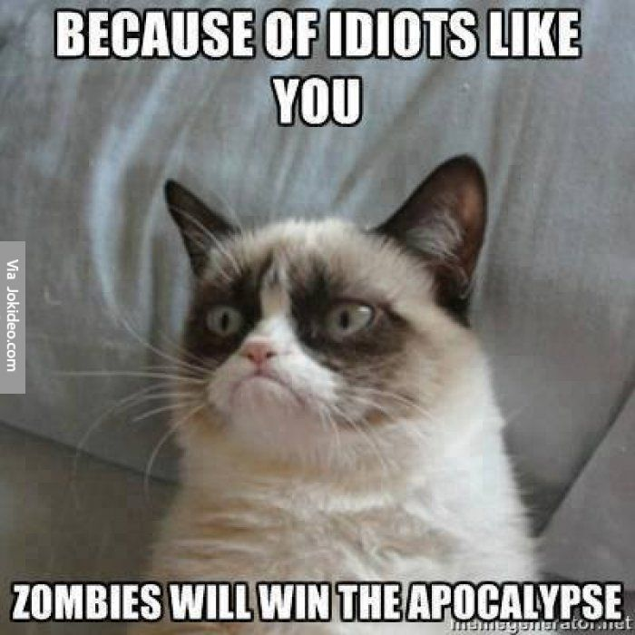Because of idiots like you grumpy cat meme
