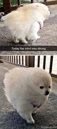 20 Funny Animal Memes That Will Make You Lol