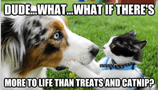 Sudden realization cat and dog meme