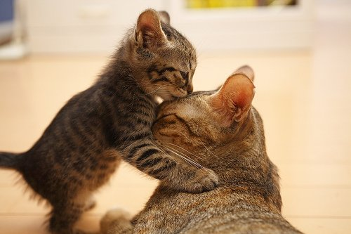 I Love You Mom Kitty Picture