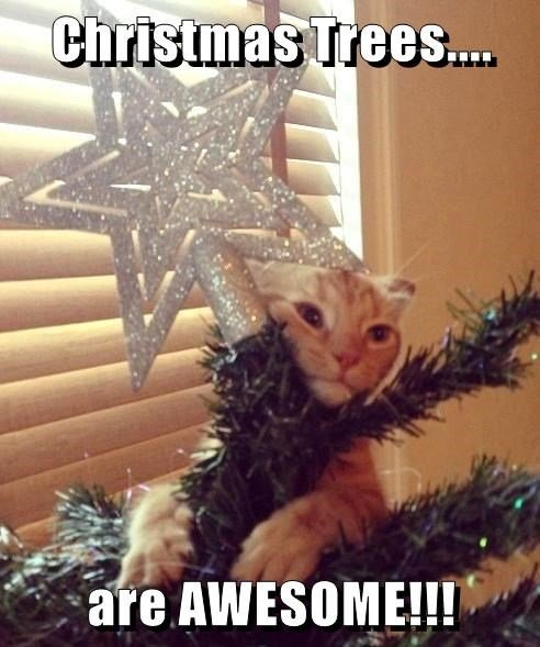 cat christmas tree awesome caption