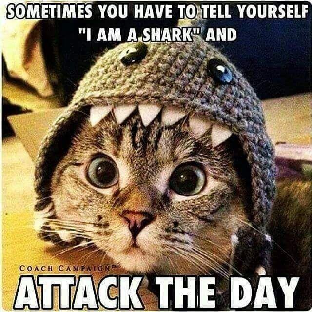 motivation believeinyourself sharks Randomly amusing Pinterest