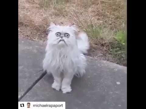 Michael Rapaport This Stray Cat Looks Like Grandma