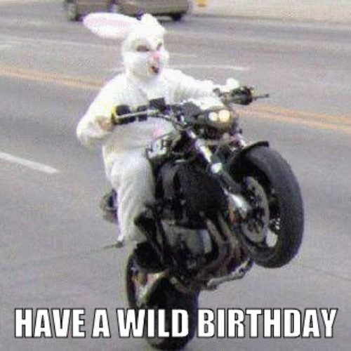 Have a Wild Birthday Birthday Funnies Funny Happy Birthdays Funny Happy Birthday Meme