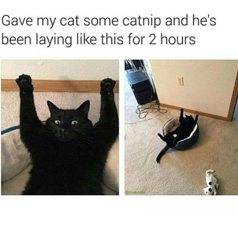 Cats can t live with em well maybe you just can t live with em If only they weren t so stinkin cute Cats CatMemes Caturday