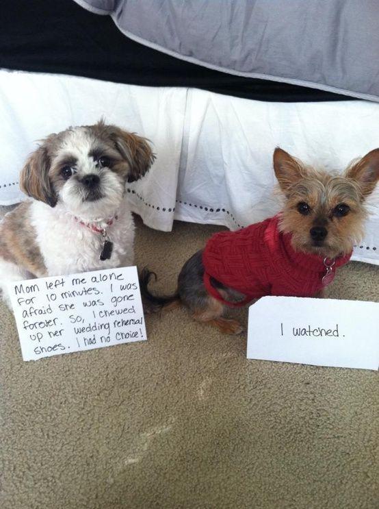 Funny Dog funnydogshaming
