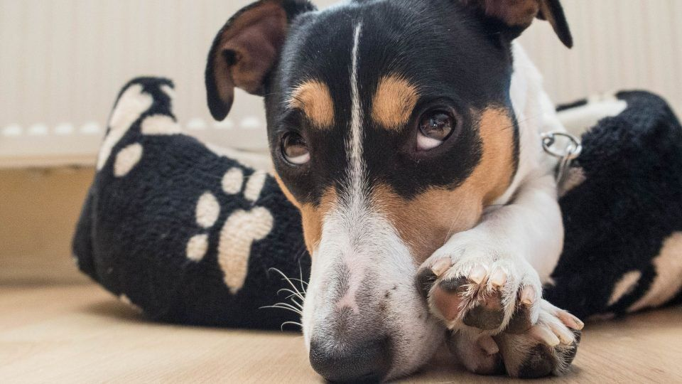 Why Dogs are Afraid of Fireworks and How to Help