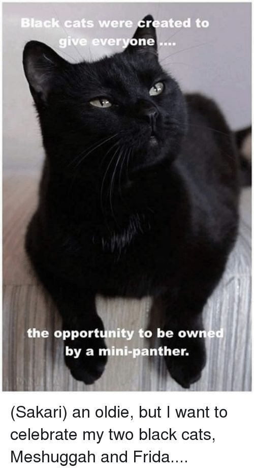 Cats Memes and Black Black cats were created to give everyone the opportunity
