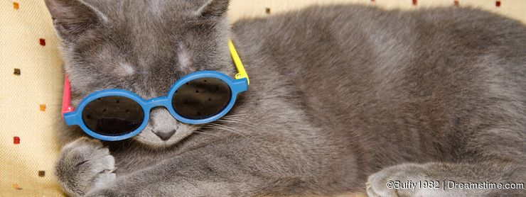 Funny cat with sunglasses