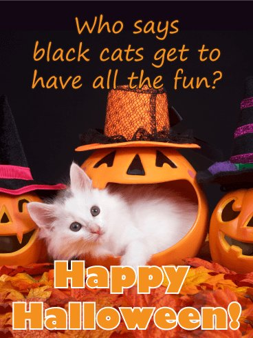 White Cat Have Fun Funny Halloween Card