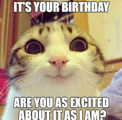crazy cat lady birthday meme 3