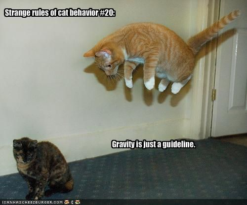 My Top Collection Funny kitten pics with captions 4
