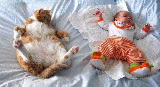 Funny super fat cat
