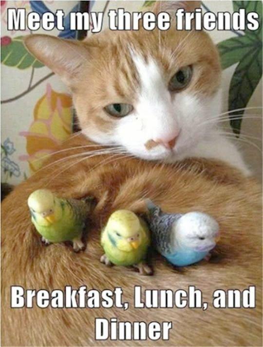 Terrific Cute Kittens Wallpaper visit Animal Friends Pinterest