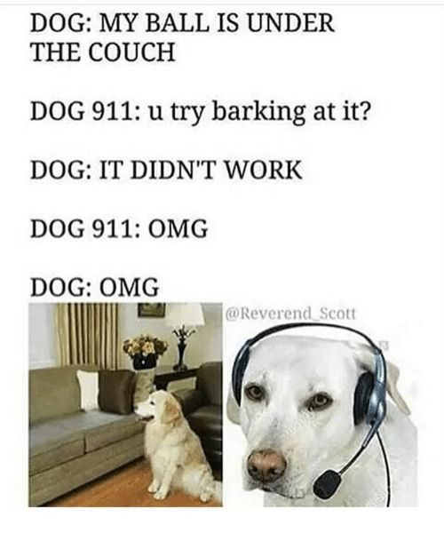 Dogs Funny and Omg DOG MY BALL IS UNDER THE COUCH DOG