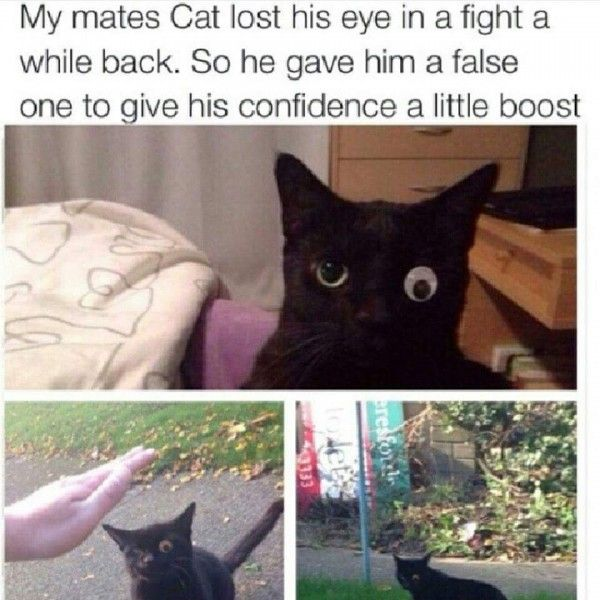 Posts Details Tags Cat lost his eye in a fight funny cat pictures Categories Funny animal memes jokes and pictures