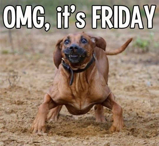 OMG it s Friday Yeah I m pretty excited it Friday Funny Stuff Pinterest