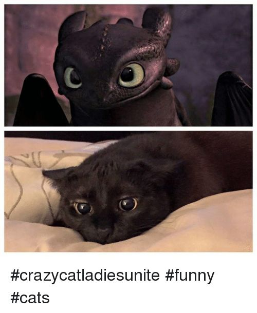 Memes 🤖 and Funny Cats crazycatla sunite funny cats