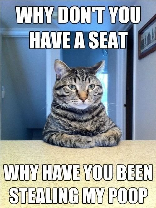 Some questions should never be answered So FunnyFunny CatsFunny