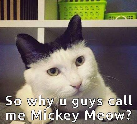 cat funny cats mickey mouse cat memes