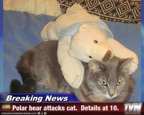 Breaking News Polar bear s cat Details at 10