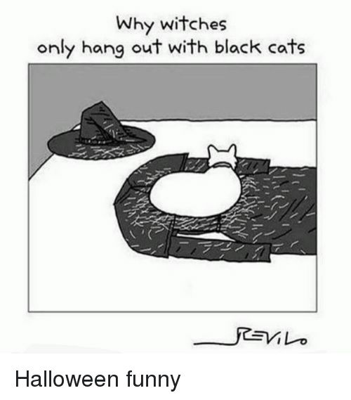 Halloween Memes and Black Why witches only hang out with black cats Halloween Halloween funny