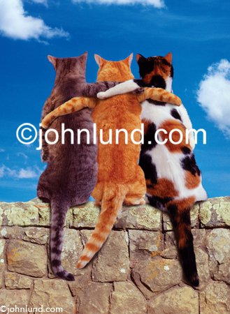 Three cats have their arms around each other while sitting on a wall in this funny stock photo about friendship in the pet world
