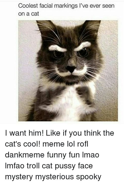 Memes 🤖 and Cat Coolest facial markings I ve ever seen on